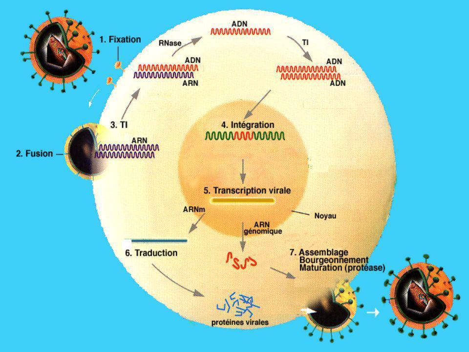 PRIMO-INFECTION Après contage, multiplication silencieuse du virus dans lorganisme pendant une dizaine de jours.