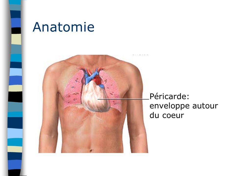 Anatomie Péricarde: enveloppe autour du coeur