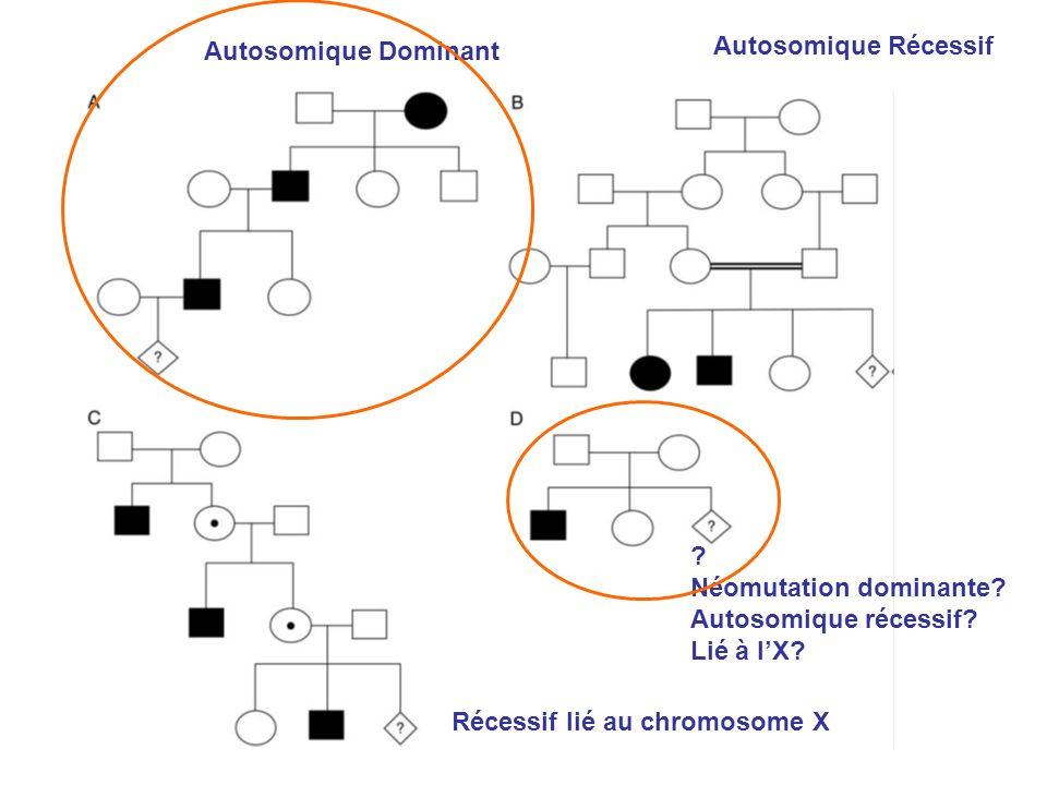 Autosomique Dominant Autosomique Récessif Récessif lié au chromosome X ? Néomutation dominante? Autosomique récessif? Lié à lX?