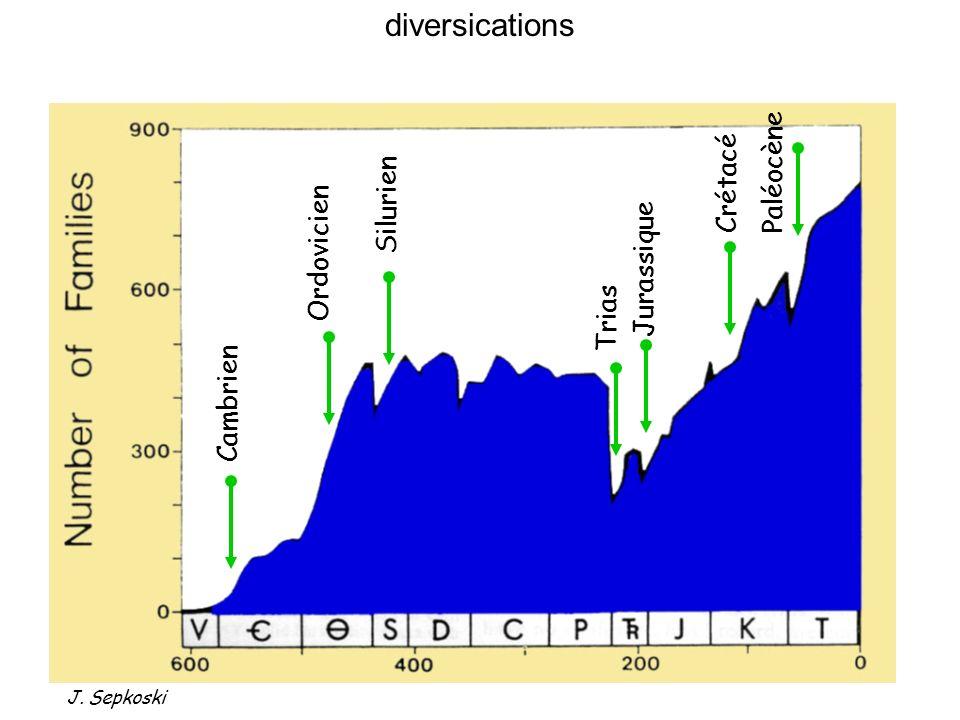 Ordovicien Cambrien Jurassique Trias Crétacé Paléocène Silurien 3 Les grandes transitions Phases de diversification rapide J. Sepkoski diversications
