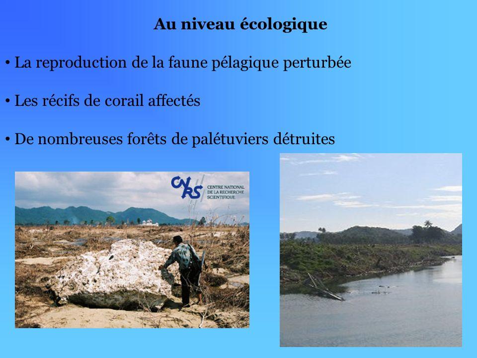 Au niveau écologique La reproduction de la faune pélagique perturbée Les récifs de corail affectés De nombreuses forêts de palétuviers détruites