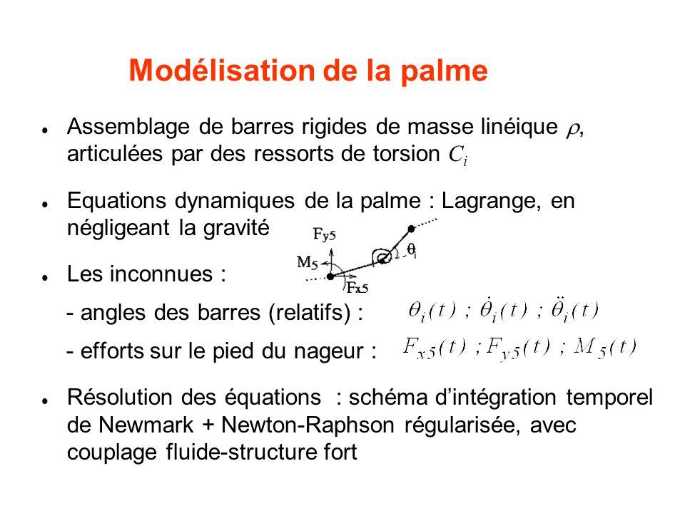 Modélisation de la palme Assemblage de barres rigides de masse linéique, articulées par des ressorts de torsion C i Equations dynamiques de la palme :