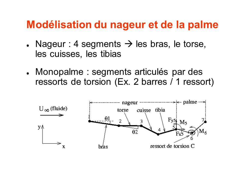 Modélisation du nageur et de la palme Nageur : 4 segments les bras, le torse, les cuisses, les tibias Monopalme : segments articulés par des ressorts