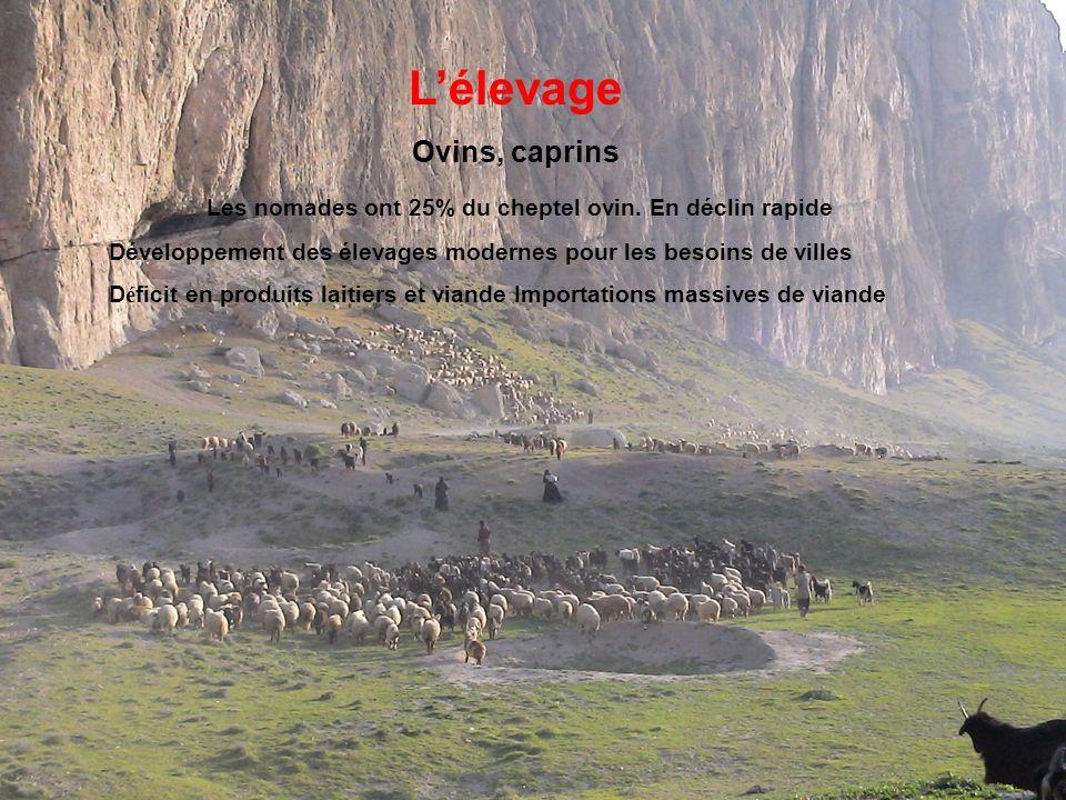 Lélevage Ovins, caprins Les nomades ont 25% du cheptel ovin.