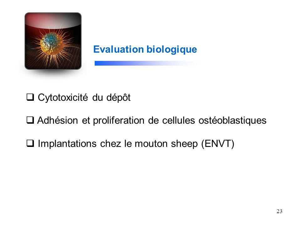 23 Evaluation biologique Cytotoxicité du dépôt Adhésion et proliferation de cellules ostéoblastiques Implantations chez le mouton sheep (ENVT)