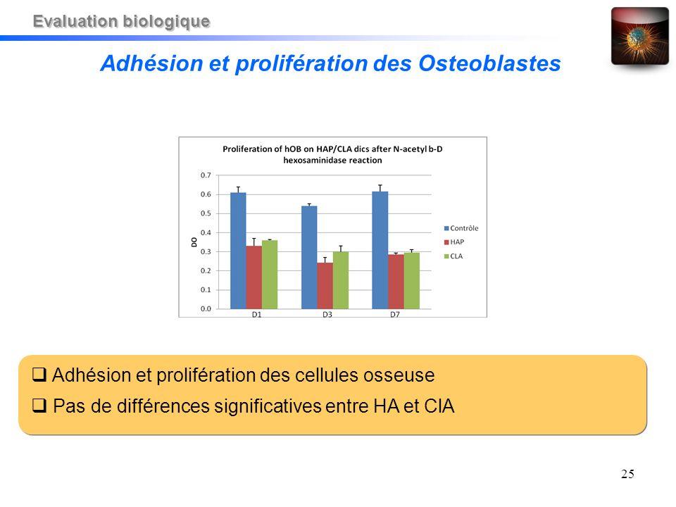 25 Adhésion et prolifération des cellules osseuse Pas de différences significatives entre HA et ClA Adhésion et prolifération des Osteoblastes Evaluat
