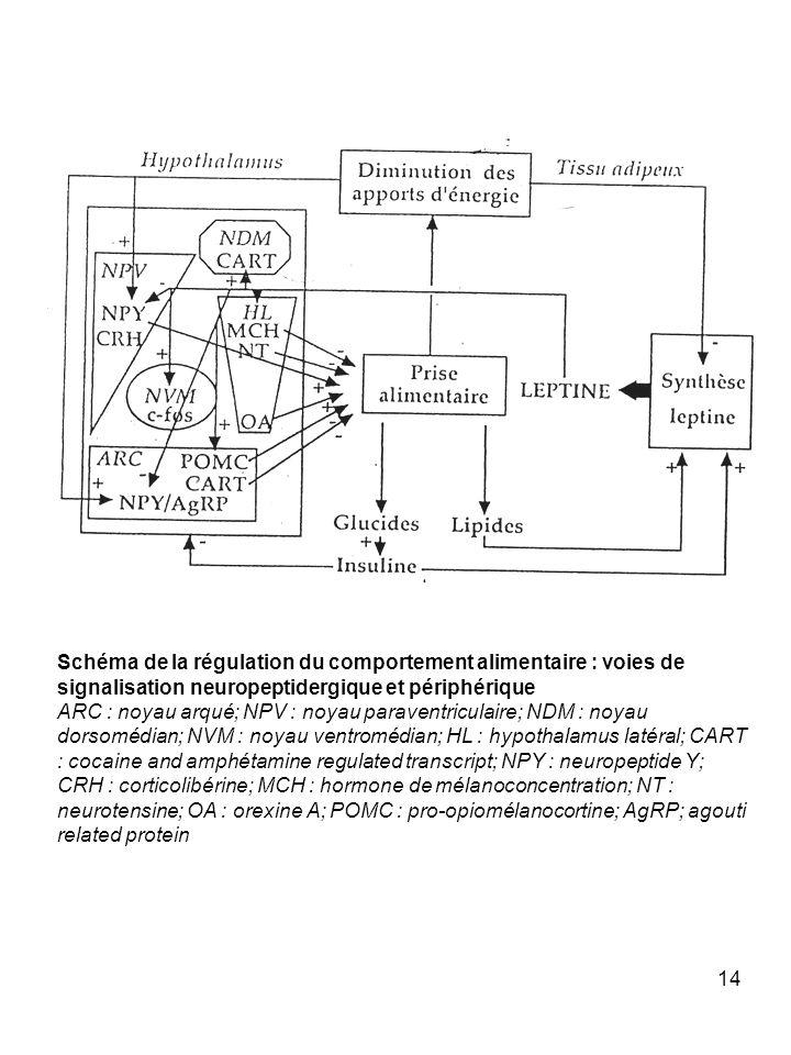 14 Schéma de la régulation du comportement alimentaire : voies de signalisation neuropeptidergique et périphérique ARC : noyau arqué; NPV : noyau para