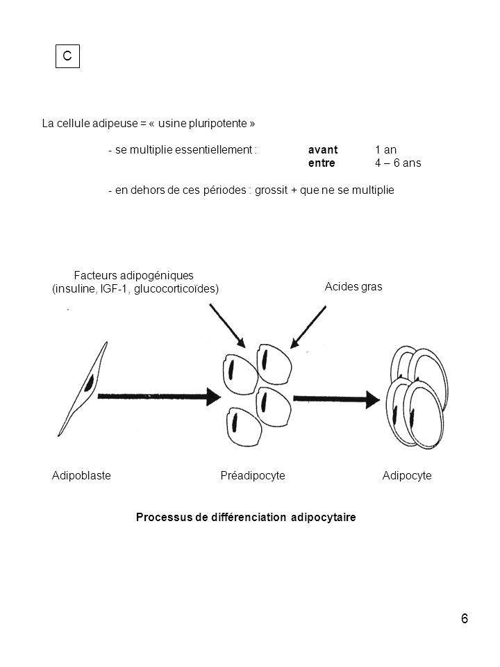 7 C suite Angiotensine II Angiotensinogène Adiponectine Monobutyrine Acide Lysophosphatidique Cytokines : TNF –a IL-6 PAI-1 Précurseurs Corticosurrénaliens Oestrogènes Leptines Protéines du complément : Facteur D (adipsine), C3 B Lipoprotéine Lipase Protéine de transfert des esters de cholestérol Protéine de la matrice extracellulaire IGF-1 Protéine de liaison du rétinol dIGF-1 Adipocyte : cellule sécrétrice à activité endocrine et paracrine