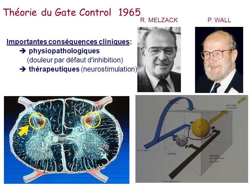 Importantes conséquences cliniques: physiopathologiques (douleur par défaut d'inhibition) thérapeutiques (neurostimulation) R. MELZACKP. WALL Théorie