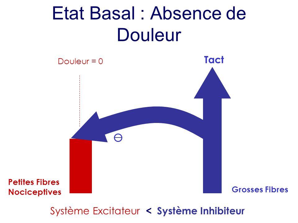 Etat Basal : Absence de Douleur Petites Fibres Nociceptives Douleur = 0 Tact Grosses Fibres Système Excitateur < Système Inhibiteur