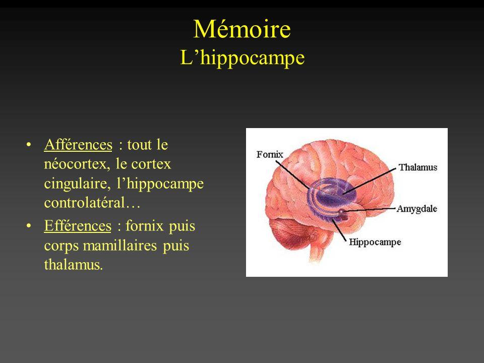 Afférences : tout le néocortex, le cortex cingulaire, lhippocampe controlatéral… Efférences : fornix puis corps mamillaires puis thalamus.