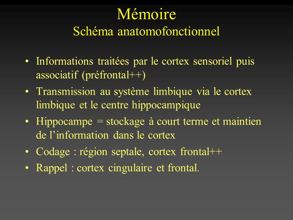 Informations traitées par le cortex sensoriel puis associatif (préfrontal++) Transmission au système limbique via le cortex limbique et le centre hipp