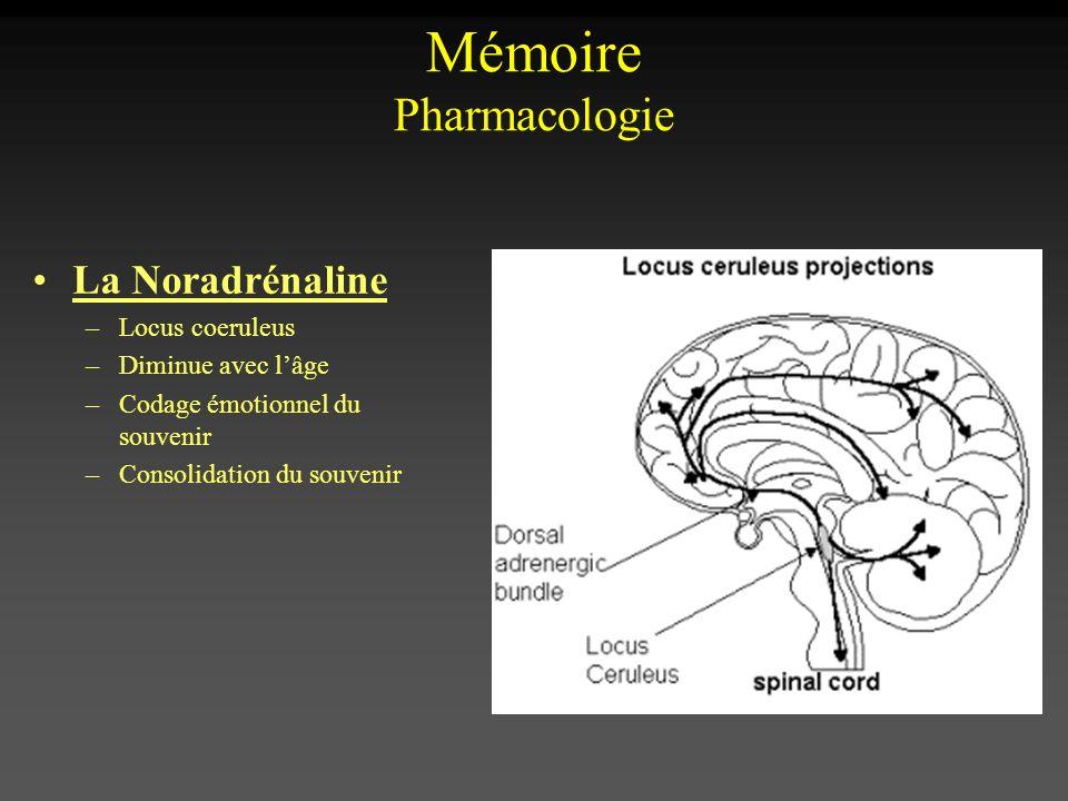 La Noradrénaline –Locus coeruleus –Diminue avec lâge –Codage émotionnel du souvenir –Consolidation du souvenir