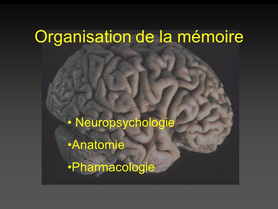 Organisation de la mémoire Neuropsychologie Anatomie Pharmacologie