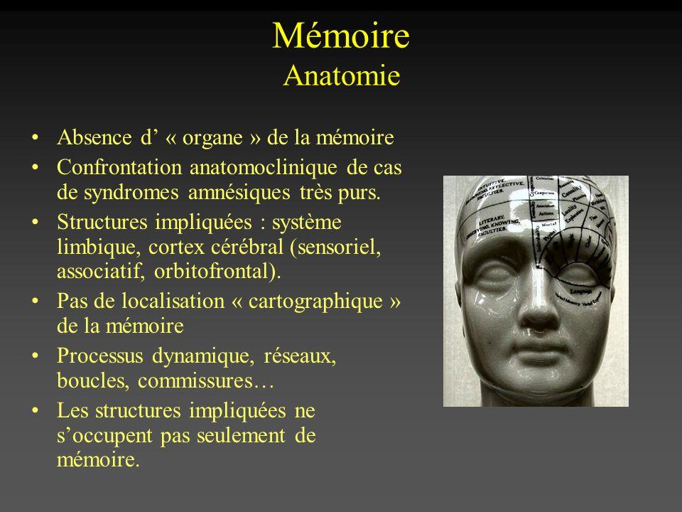 Mémoire Anatomie Absence d « organe » de la mémoire Confrontation anatomoclinique de cas de syndromes amnésiques très purs. Structures impliquées : sy