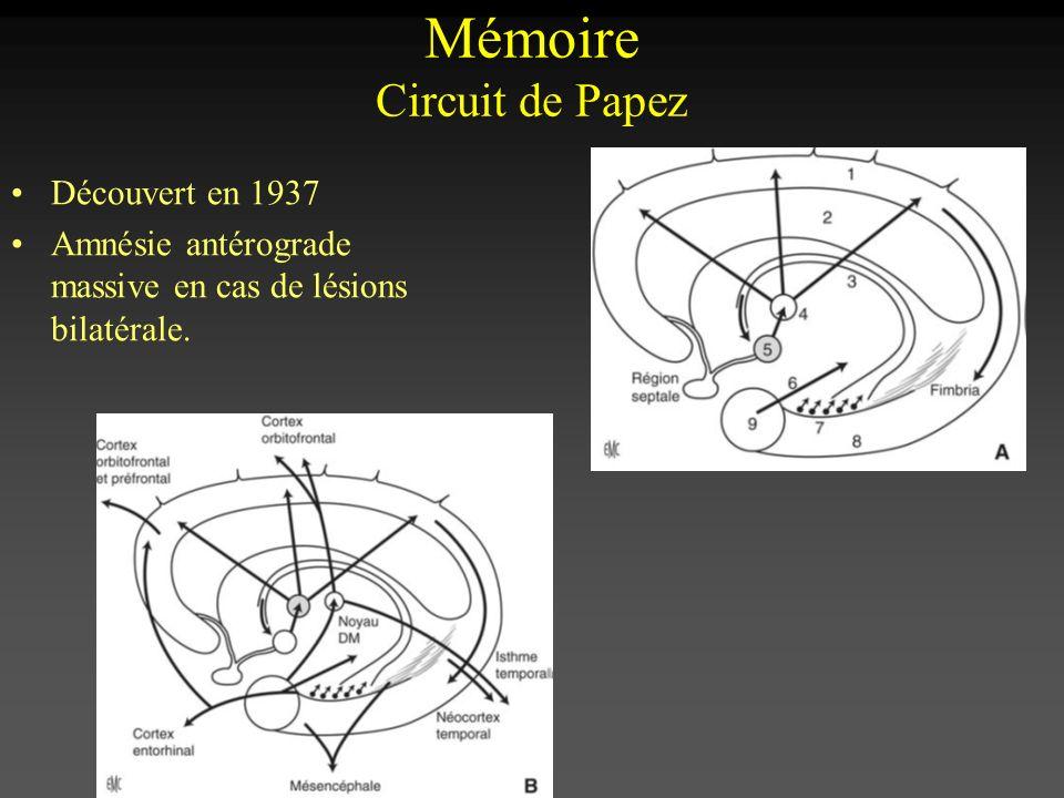 Découvert en 1937 Amnésie antérograde massive en cas de lésions bilatérale. Mémoire Circuit de Papez