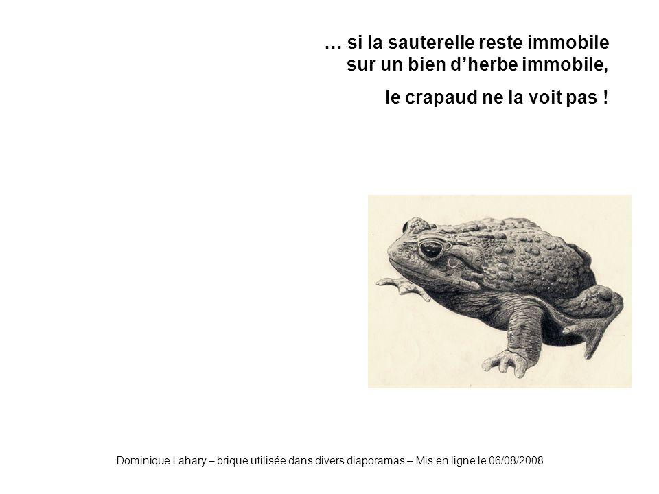 Dominique Lahary – brique utilisée dans divers diaporamas – Mis en ligne le 06/08/2008 … si la sauterelle reste immobile sur un bien dherbe immobile, le crapaud ne la voit pas !