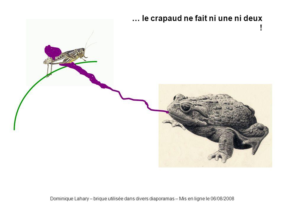 Dominique Lahary – brique utilisée dans divers diaporamas – Mis en ligne le 06/08/2008 … le crapaud ne fait ni une ni deux !