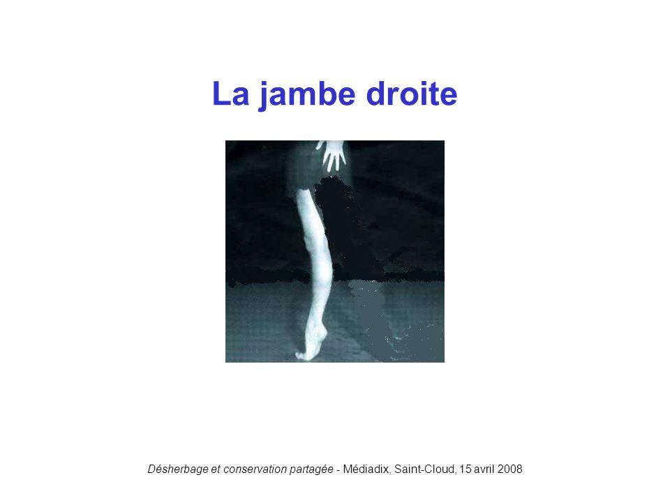 Désherbage et conservation partagée - Médiadix, Saint-Cloud, 15 avril 2008 La jambe droite