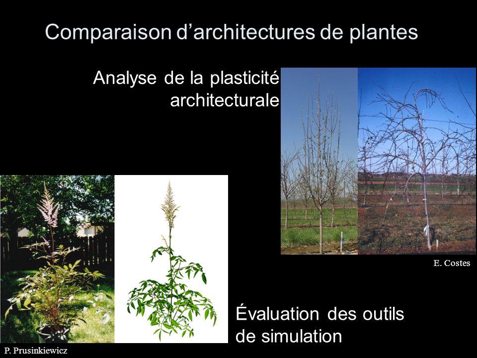 Comparaison darchitectures de plantes E. Costes Analyse de la plasticité architecturale P.