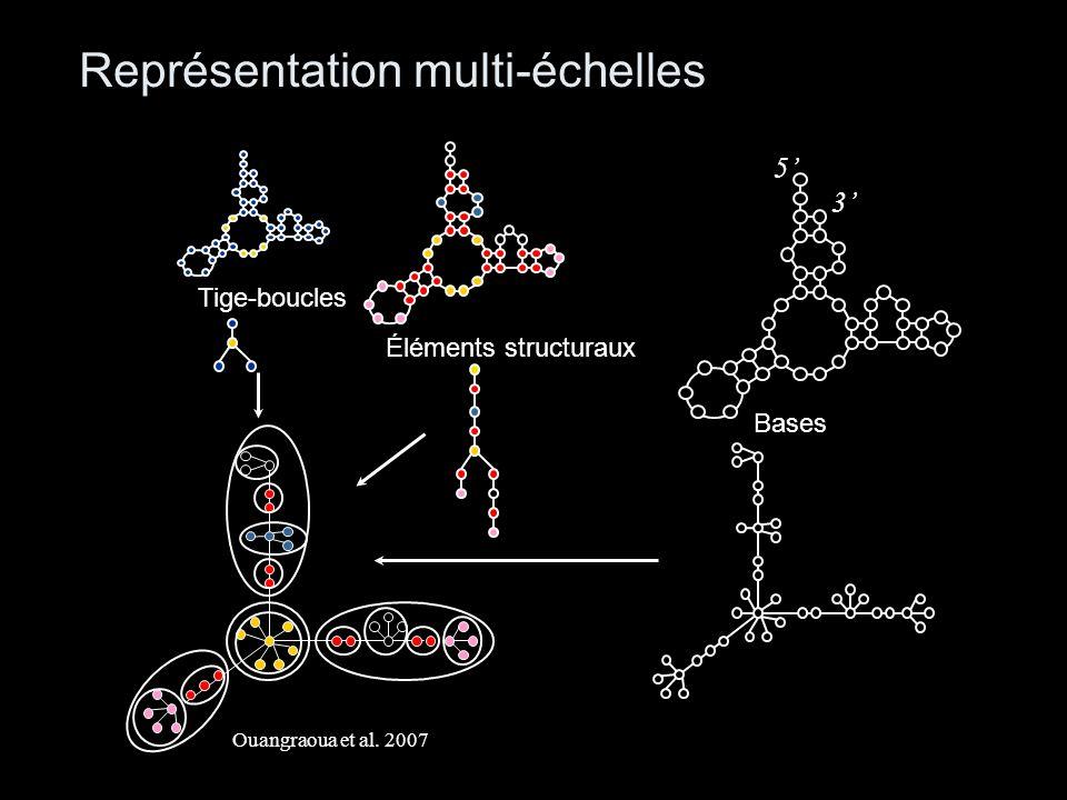 Représentation multi-échelles Éléments structuraux 5 3 Bases Tige-boucles Ouangraoua et al. 2007
