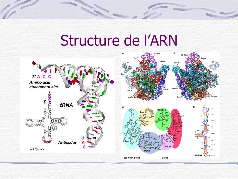 Structure de lARN