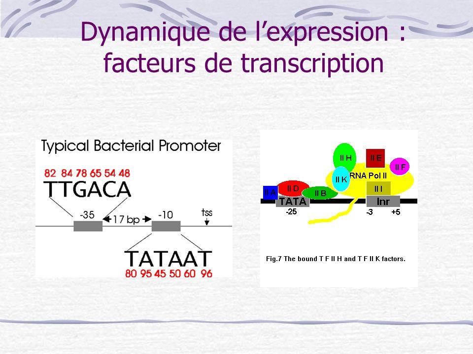 Dynamique de lexpression : facteurs de transcription