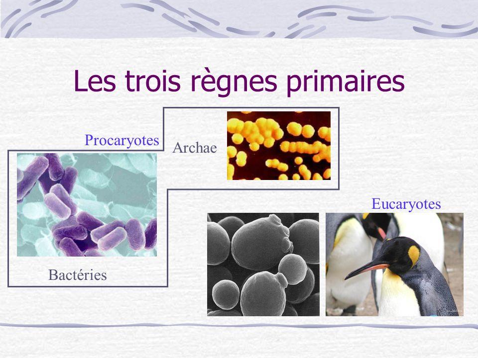 Les trois règnes primaires Bactéries Archae Eucaryotes Procaryotes