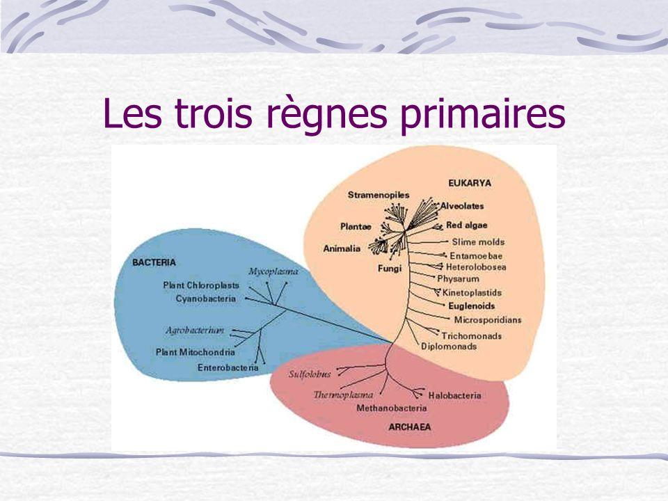 Les trois règnes primaires