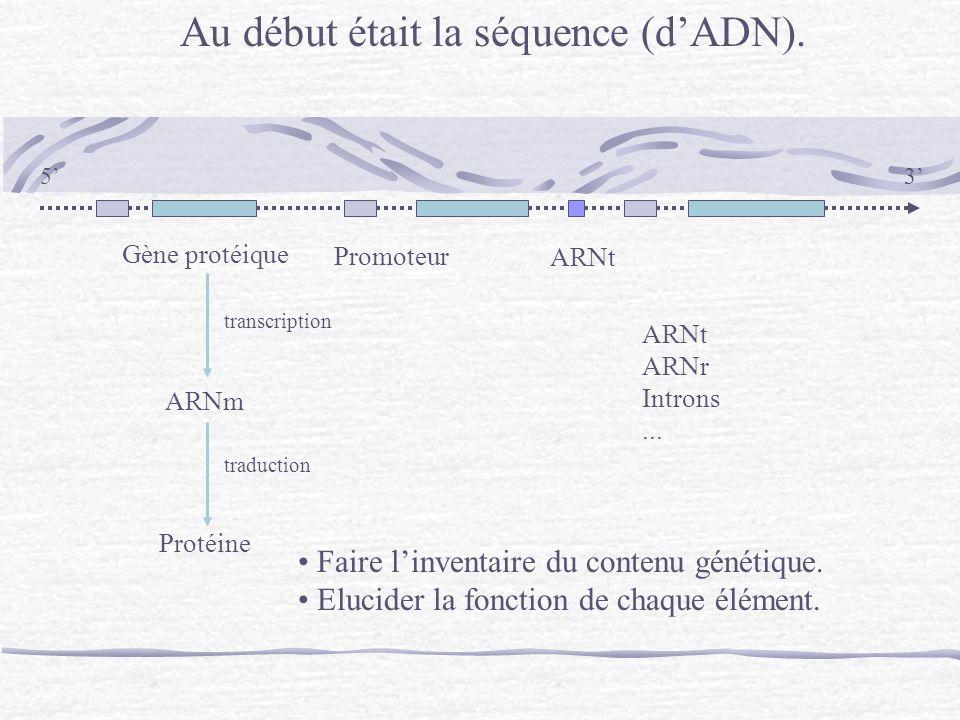 Promoteur ARNt ARNr Introns... Au début était la séquence (dADN). 53 Gène protéique ARNm Protéine transcription traduction Faire linventaire du conten