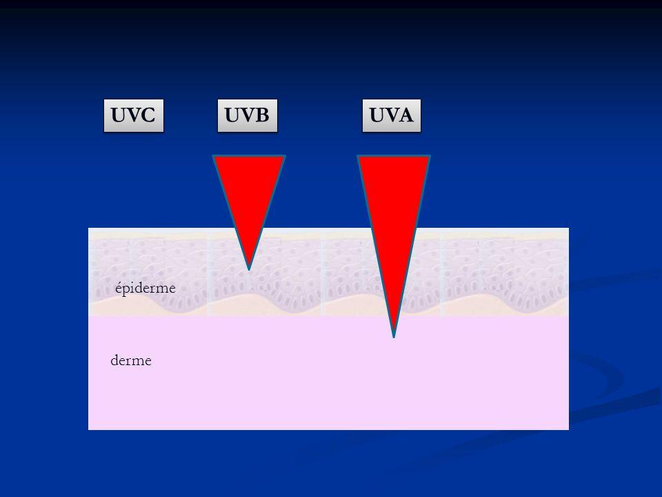 épiderme derme UVB UVA UVC