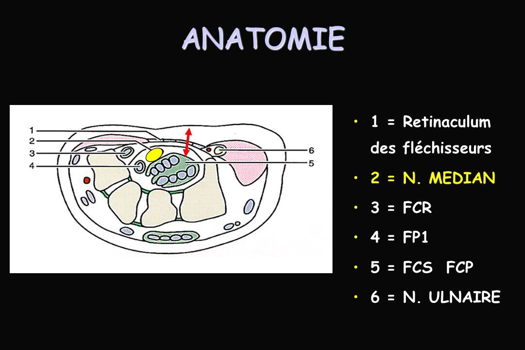 ANATOMIE 1 = Retinaculum des fléchisseurs 2 = N. MEDIAN 3 = FCR 4 = FP1 5 = FCS FCP 6 = N. ULNAIRE