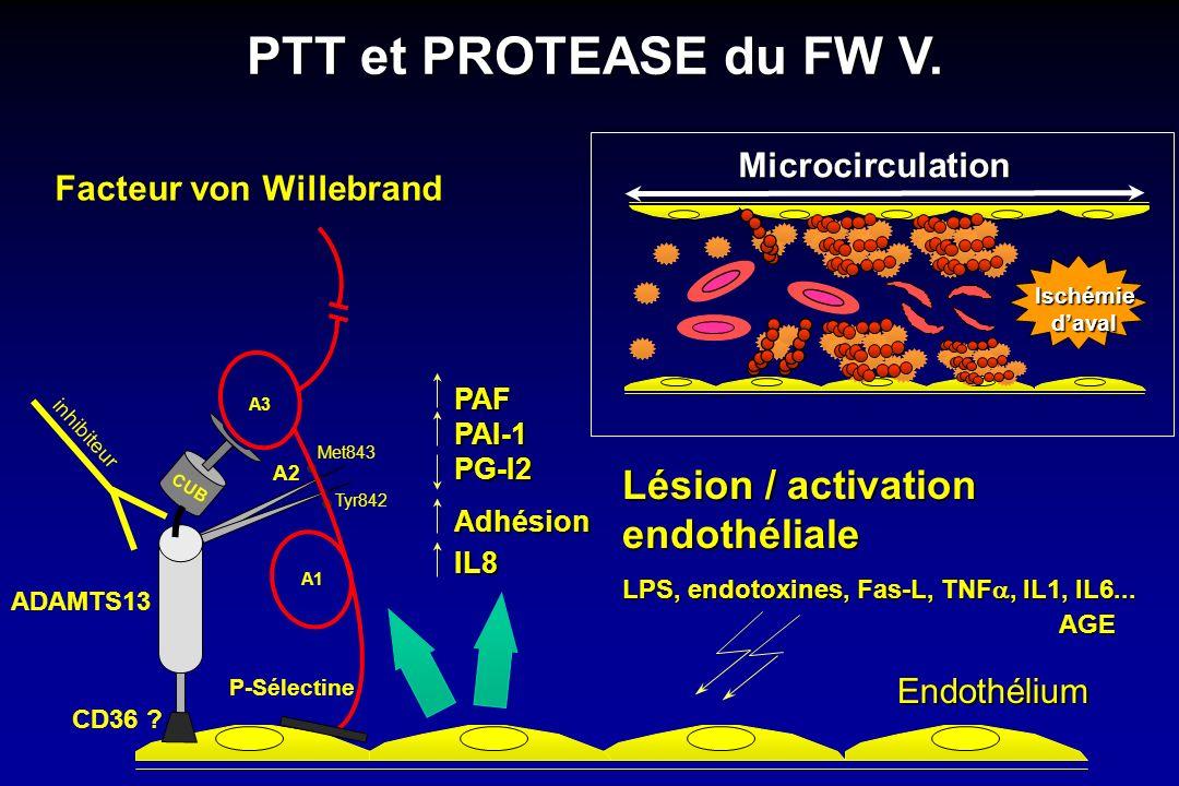 Endothélium PAFPAI-1PG-I2Adhésion IL8 Microcirculation Ischémiedaval PTT et PROTEASE du FW V. ADAMTS13 CUB CD36 ? Tyr842 Met843 A3 A1 A2 P-Sélectine F