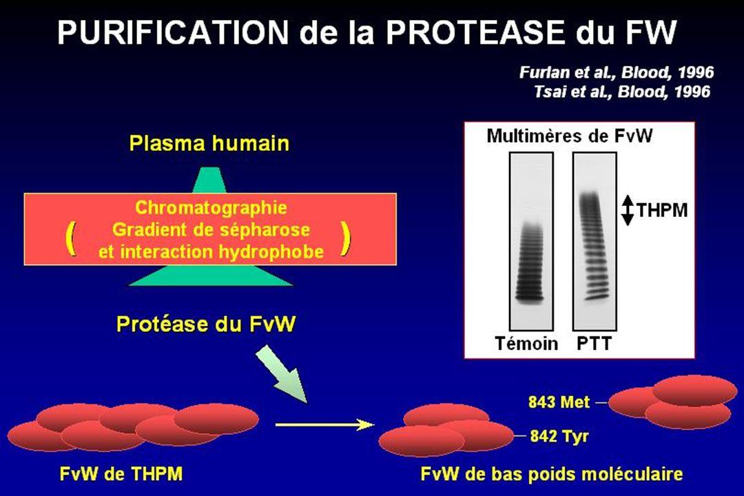 Le PTT est associé à un déficit sévère en protéase du FvW Furlan et al., N Engl J Med 1998 - Tsaï et al., N Engl J Med 1998 - Veyradier et al., Blood 2001 53 cas de MAT 30 PTT 23 SHU 24 cas non familiaux 6 cas familiaux 20 cas: déficit sévère 4 cas: déficit modéré 6 cas: déficit sans inhibiteur (20/24: inhibiteur IgG) 13 cas non familiaux 10 cas familiaux 11 cas: activité normale 2 cas: déficit 2 cas: déficit 10 cas: activité normale PTT et PROTEASE du FW I.