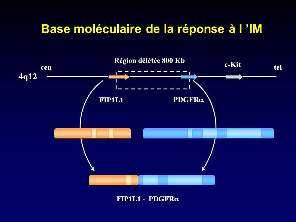 Base moléculaire de la réponse à l IM centel FIP1L1 PDGFR PDGFR c-Kit Région délétée 800 Kb 4q12 FIP1L1 - PDGFR PDGFR