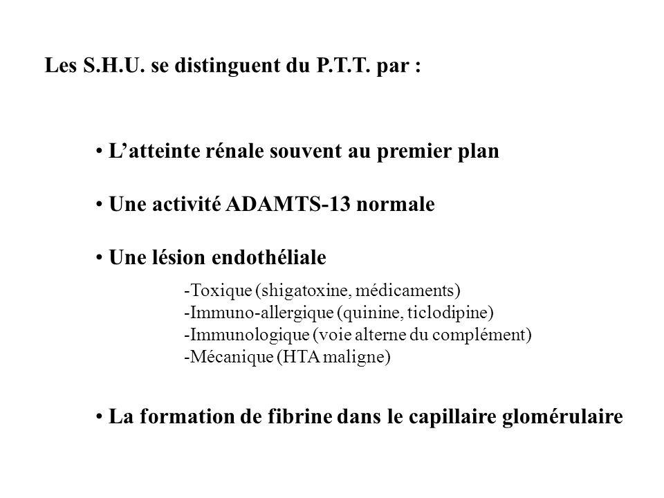 Les S.H.U. se distinguent du P.T.T. par : Latteinte rénale souvent au premier plan Une activité ADAMTS-13 normale Une lésion endothéliale La formation