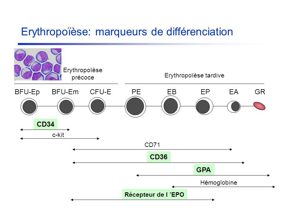 Erythropoïèse tardive Erythropoïèse précoce BFU-EpBFU-EmCFU-EGRPEEAEPEB CD71 CD36 GPA CD34 c-kit Hémoglobine Erythropoïèse: marqueurs de différenciati