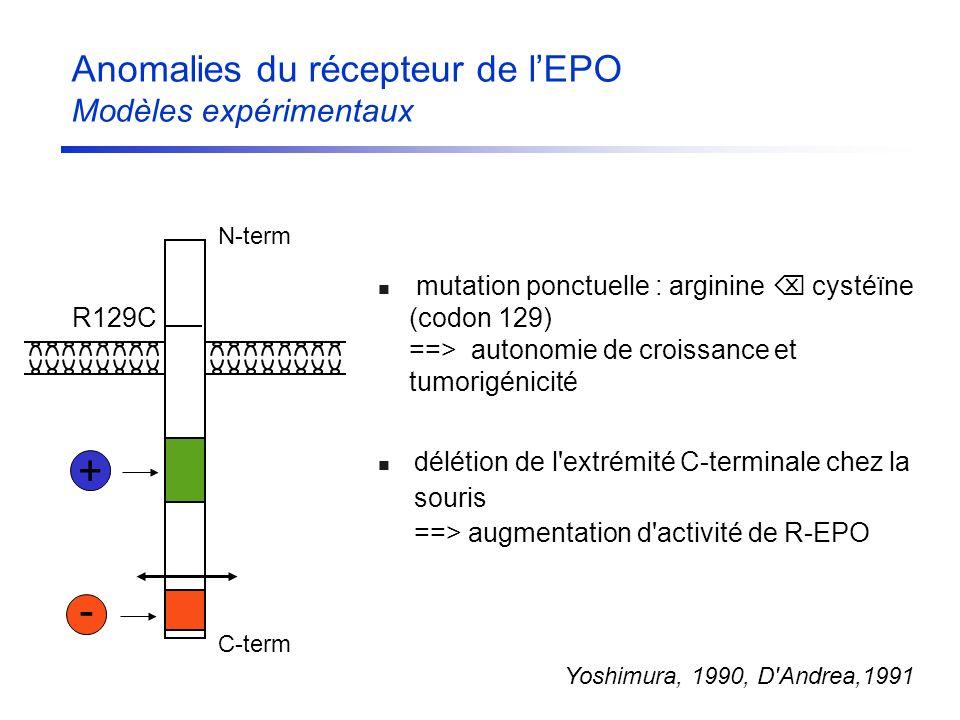 Anomalies du récepteur de lEPO Modèles expérimentaux délétion de l'extrémité C-terminale chez la souris ==> augmentation d'activité de R-EPO mutation