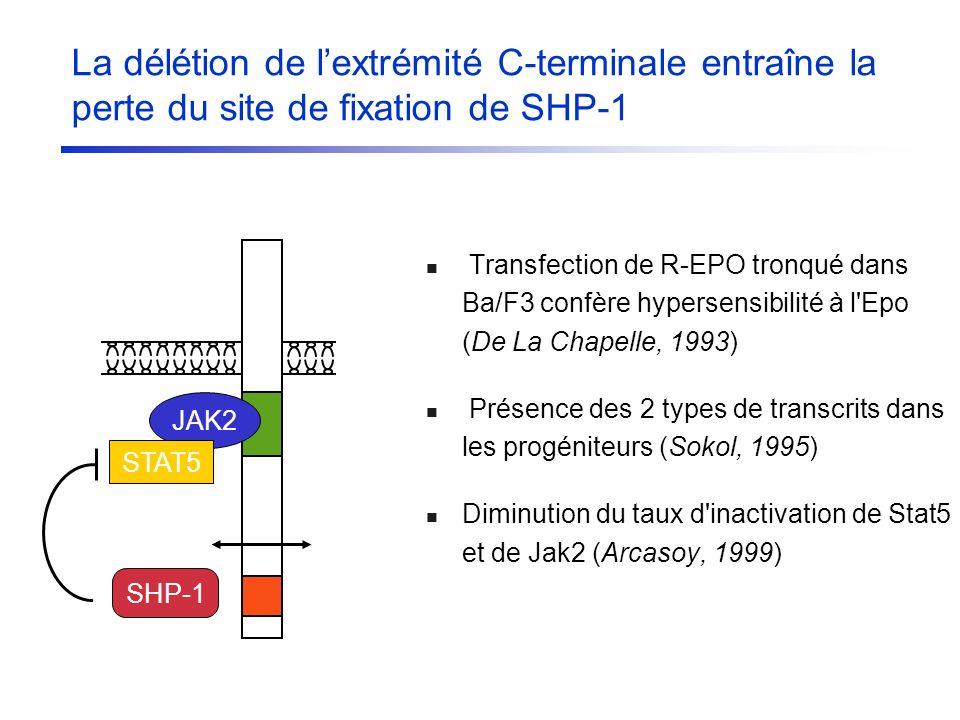 Transfection de R-EPO tronqué dans Ba/F3 confère hypersensibilité à l'Epo (De La Chapelle, 1993) Présence des 2 types de transcrits dans les progénite