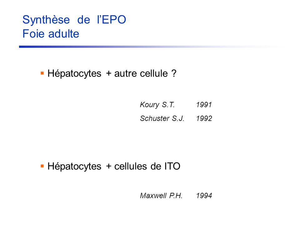 Hépatocytes + autre cellule ? Koury S.T.1991 Schuster S.J.1992 Hépatocytes + cellules de ITO Maxwell P.H.1994 Synthèse de lEPO Foie adulte