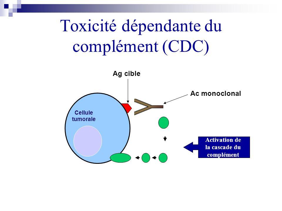 Toxicité dépendante du complément (CDC) Cellule tumorale Ag cible Activation de la cascade du complément Ac monoclonal