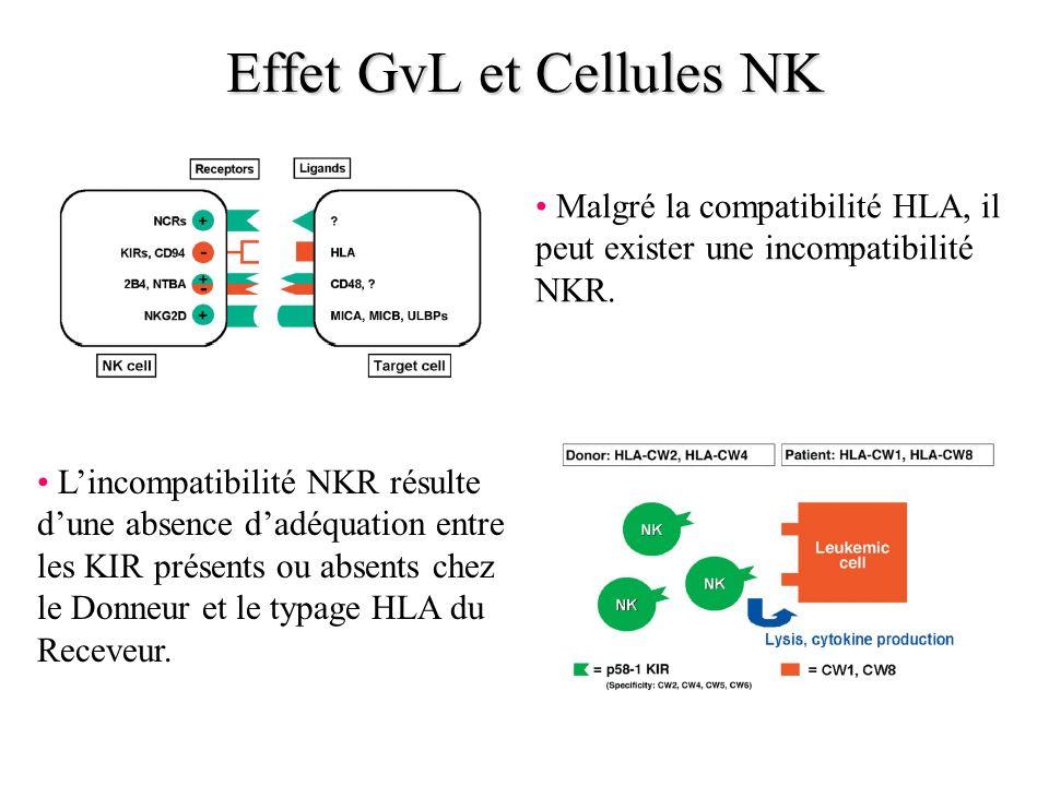 Effet GvL et Cellules NK Malgré la compatibilité HLA, il peut exister une incompatibilité NKR. Lincompatibilité NKR résulte dune absence dadéquation e