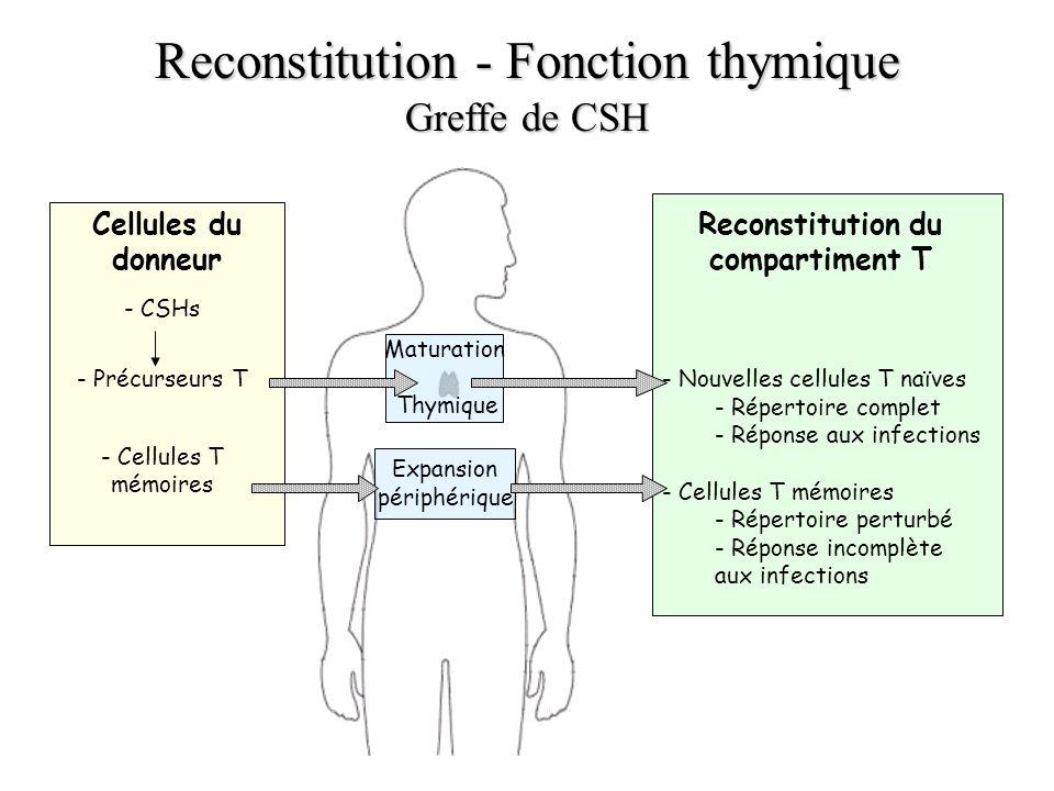 Reconstitution - Fonction thymique Greffe de CSH Cellules du donneur - CSHs - Précurseurs T - Cellules T mémoires Reconstitution du compartiment T - N