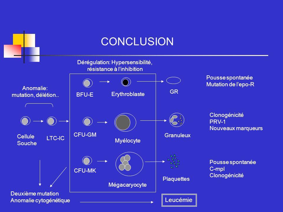 CONCLUSION Cellule Souche CFU-MK BFU-E CFU-GM Mégacaryocyte Myélocyte Erythroblaste GR Granuleux Plaquettes Anomalie: mutation, délétion.. Dérégulatio