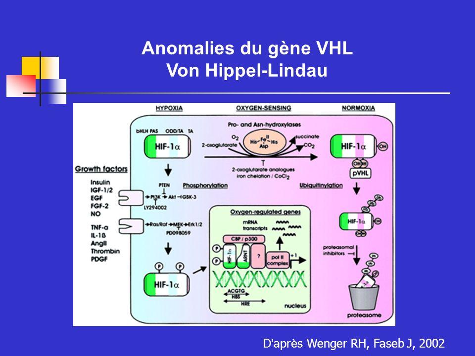 Mutations hétérozygotes constitutives Transmission autosomale dominante Acquisition dune autre mutation dans lallèle sauvage Mutations faux sens, tronquantes ou délétions anomalies du systèmes nerveux cancer du rein, hémangioblastome, phéochromocytome Polyglobulies réactionnelles Tumeurs sécrétrices dEpo Anomalies de VHL Le Syndrome de von Hippel-Lindau