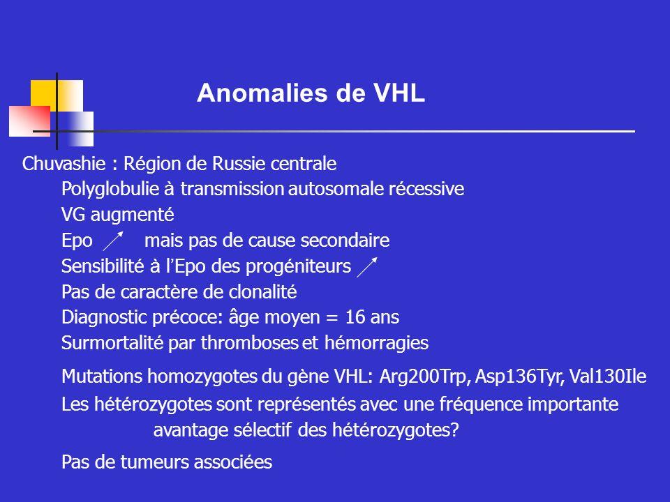 Anomalies de VHL Conséquences des mutations de VHL dans la polyglobulie de Chuvashie Réduction de lubiquitination de HIF-1 Stabilisation de la protéine HIF-1 Le mutant est moins efficace pour inhiber la transactivation par HIF-1 Certains gènes cibles de HIF-1 sont surexprimés sans hypoxie: Epo, VEGF en particulier Mais certains gènes cibles restent inchangés Au total: semble une altération modérée des fonctions de VHL