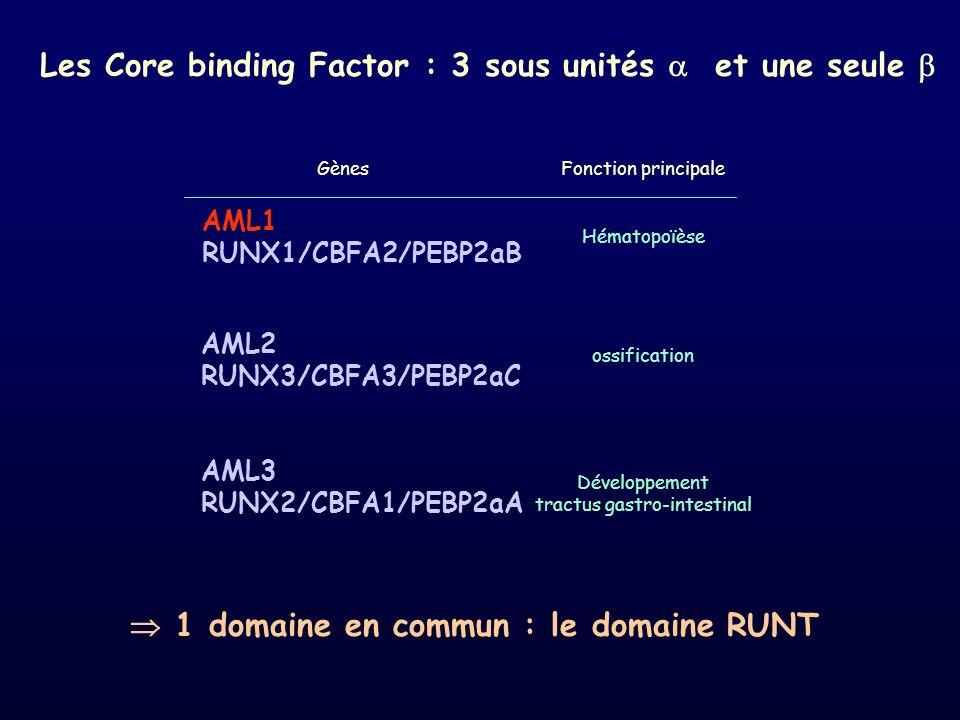 AML1 RUNX1/CBFA2/PEBP2aB AML2 RUNX3/CBFA3/PEBP2aC AML3 RUNX2/CBFA1/PEBP2aA Hématopoïèse ossification Développement tractus gastro-intestinal Fonction