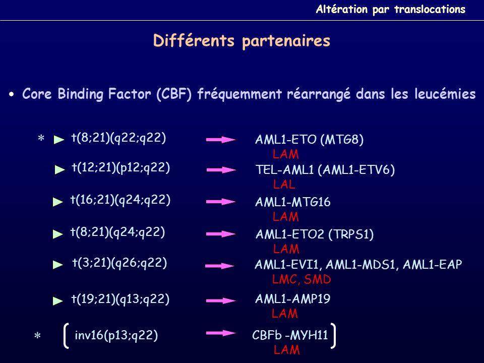 Core Binding Factor (CBF) fréquemment réarrangé dans les leucémies t(8;21)(q22;q22) AML1-ETO (MTG8) LAM inv16(p13;q22) CBFb -MYH11 LAM t(16;21)(q24;q2