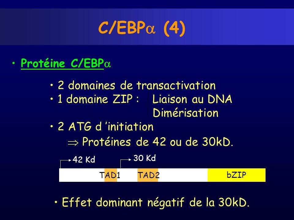 C/EBP (4) 2 domaines de transactivation 1 domaine ZIP : Liaison au DNA Dimérisation 2 ATG d initiation Protéines de 42 ou de 30kD. Effet dominant néga