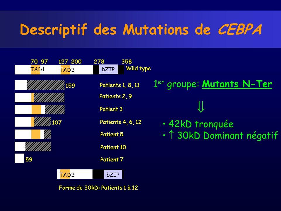 Descriptif des Mutations de CEBPA 1 er groupe: Mutants N-Ter 70 97 127 200 278 358 Forme de 30kD: Patients 1 à 12 Wild type Patients 1, 8, 11 Patients